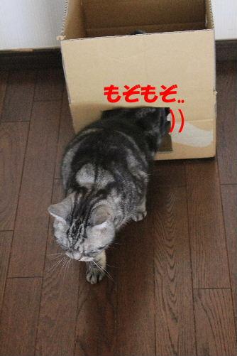 2012年2月箱箱3-6.JPG