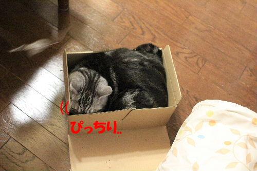 2012年3月ちい2-2.JPG