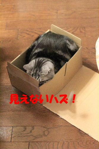 2012年3月ちい4.JPG