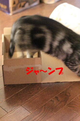 2012年3月ちい4-3.JPG