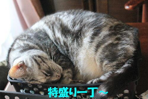 2012年3月盛り4.JPG