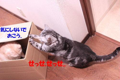 2012年3月箱4-5.JPG