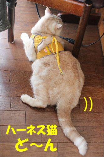 2012年4月ハーネス2-4.JPG