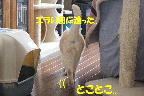 2012年4月ハーネス2-7.JPG