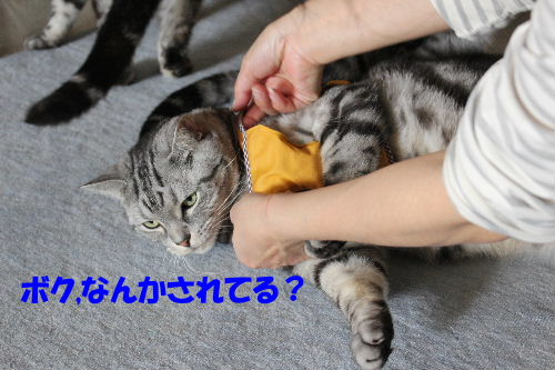 2012年4月ハーネス3.JPG