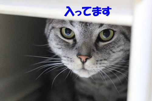 IMG_3598.JPG