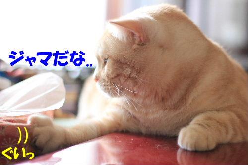 IMG_4264.JPG