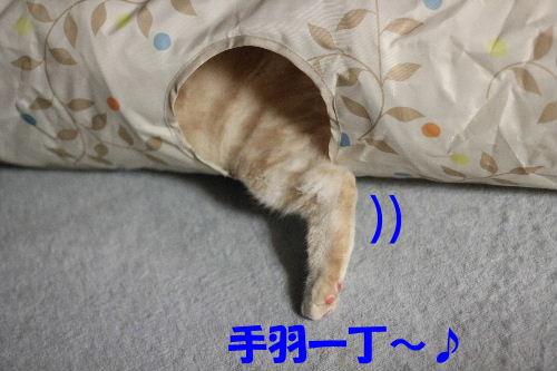 IMG_4685.JPG