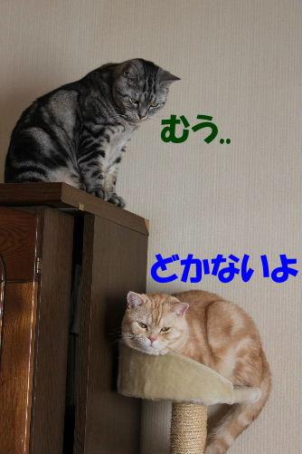 IMG_5201.JPG