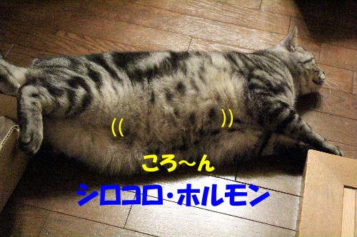 IMG_5313.JPG