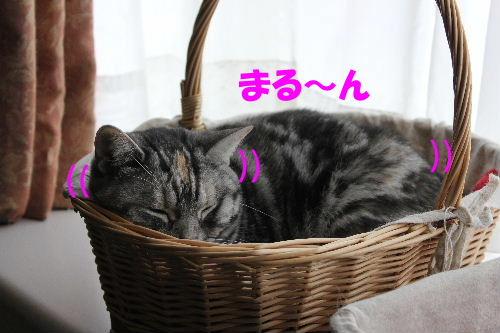 IMG_6765.JPG