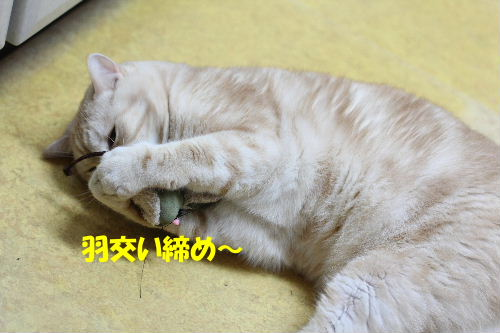 IMG_7357.JPG