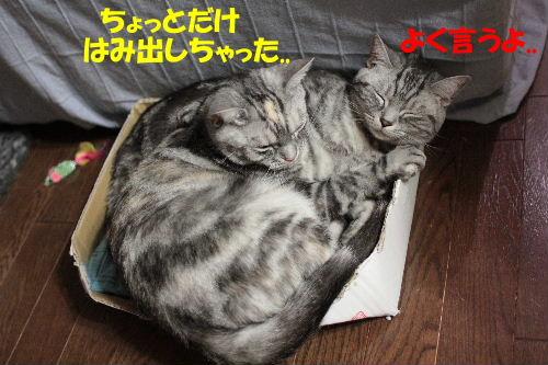 IMG_7493.JPG