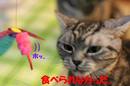 IMG_7750.JPG