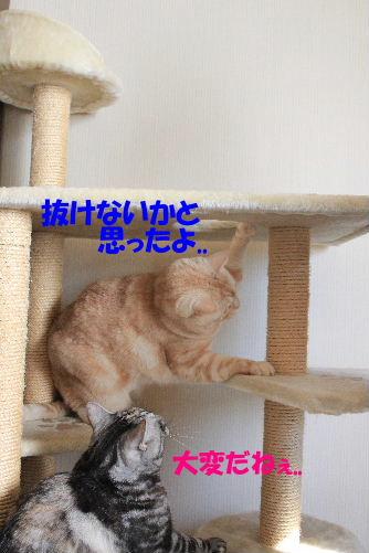 IMG_8341.JPG